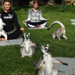 You Can Now Do Outdoor Yoga With Lemurs—and It's as Magical as It Sounds